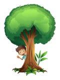 Um menino e uma ?rvore Fotografia de Stock