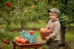 Um menino em um pomar de maçã foto de stock