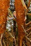 Um menino escala uma árvore Imagens de Stock Royalty Free