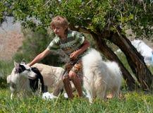 Um menino joga com um cão de puxar trenós do cão Fotos de Stock Royalty Free