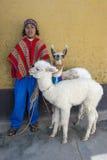 Um menino peruano com os lamas em Cusco no Peru Fotografia de Stock