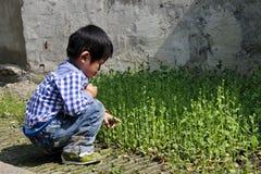 Um menino que joga com sprouts imagem de stock