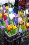 Um mercado da flor da mola: flores coloridas brilhantes em uma caixa plástica Imagens de Stock Royalty Free