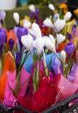 Um mercado da flor da mola: flores coloridas brilhantes em uma caixa plástica Fotos de Stock