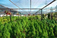 Um mercado floral para jardinar imagens de stock royalty free