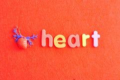 Um modelo plástico de um coração humano com o coração da palavra imagens de stock