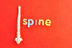 Um modelo plástico de uma espinha humana com a espinha da palavra foto de stock