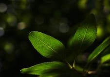 Um modo da floresta. Imagem de Stock Royalty Free