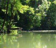 Um modo da floresta. Fotos de Stock Royalty Free