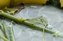 Um moldiness nos pratos com vegetais Fotografia de Stock Royalty Free