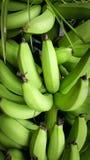 Um montão de bananas verdes fotografia de stock royalty free