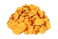 Um montão de primas comestíveis cruas no branco Fotografia de Stock Royalty Free