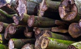 Um montão dos troncos Imagem de Stock