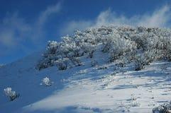 Um monte coberto de neve com árvores Fotos de Stock Royalty Free