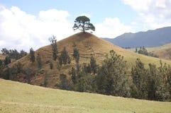 Um monte da árvore Fotos de Stock