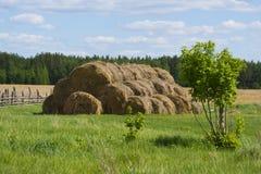 Um monte de feno no campo Foto de Stock