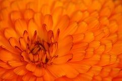 Um mosaico das folhas. Fotografia de Stock Royalty Free