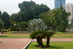 Um motim da cor em um parque da cidade tropical Fotografia de Stock