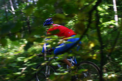 Um motociclista da montanha através da folha Foto de Stock Royalty Free