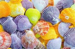 Um número de fundo colorido da concha do mar da vieira Foto de Stock Royalty Free