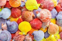 Um número de fundo colorido da concha do mar da vieira Fotos de Stock Royalty Free