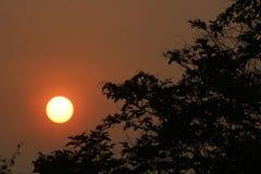 Um nascer do sol bonito na floresta imagens de stock