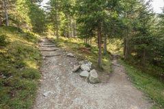 Um ?nico trajeto da montanha racha em dois sentidos diferentes foto de stock royalty free