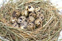 Um ninho com ovos Fotografia de Stock