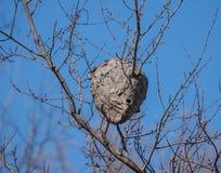 Um ninho da vespa contra Autumn Blue Sky Imagem de Stock Royalty Free