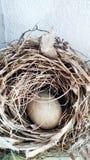 Um ninho do pássaro imagem de stock