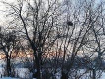 Um ninho em uma árvore perdida em uma paisagem do inverno fotografia de stock royalty free