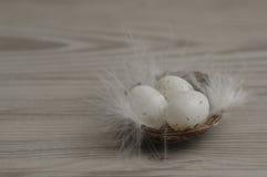 Um ninho enchido com os ovos brancos pequenos Fotografia de Stock Royalty Free