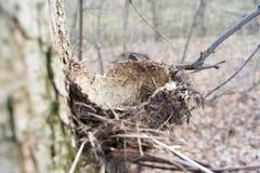 Um ninho vazio de um pássaro da floresta sem ovos imagem de stock