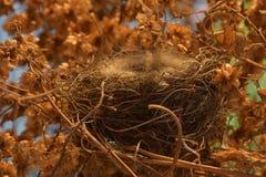Um ninho vazio do ` s do pássaro em um arvoredo dos lúpulos fotografia de stock royalty free