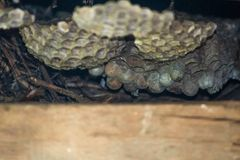 Um ninho velho do favo de mel dentro de uma caixa de madeira Nenhumas abelhas para dentro foto de stock royalty free