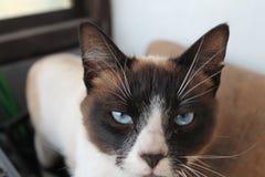Um olhar do ` s do gato Opinião séria o gato O gato é um solitário fotos de stock