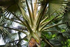 Um olhar mais atento em uma palmeira fotos de stock