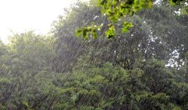 Um olhar para fora em uma precipitação fotos de stock royalty free