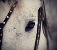 Um olho de um cavalo branco Imagem de Stock
