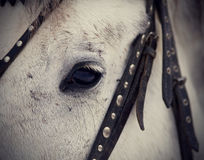 Um olho de um cavalo branco Fotos de Stock