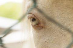 Um olho do cavalo branco em um jardim zoológico em milhão anos de parque de pedra em Pattaya, Tailândia Fotos de Stock Royalty Free