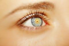 Um olho perspicaz bonito do ` s da mulher do olhar Fim acima Fotos de Stock Royalty Free