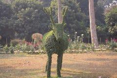 Um olho que trava o topiary verde dos cervos em um jardim imagem de stock