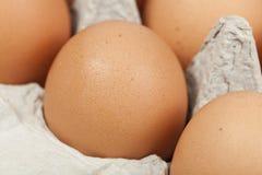 Um ovo marrom Fotos de Stock