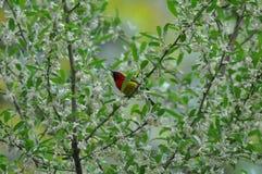 Um pássaro Imagens de Stock