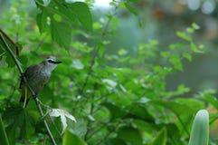 Um pássaro Fotografia de Stock