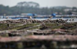 Um pássaro Fotos de Stock