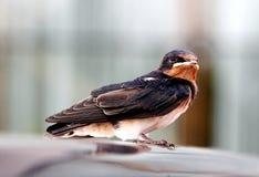 Um pássaro Imagem de Stock