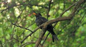 Um pássaro Fotos de Stock Royalty Free