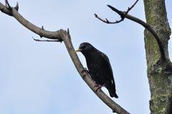 Um pássaro amigável fotografia de stock royalty free